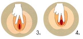 อวัยวะเพศของผู้หญิงแบ่งเป็น 2 ส่วนใหญ่ๆ คืออวัยวะเพศภายนอกซึ่งส่วนมากจะมองเห็นได้จากภายนอก  เช่น หัวหน่าว แคมใหญ่ แคมเล็ก และฝีเย็บ ...