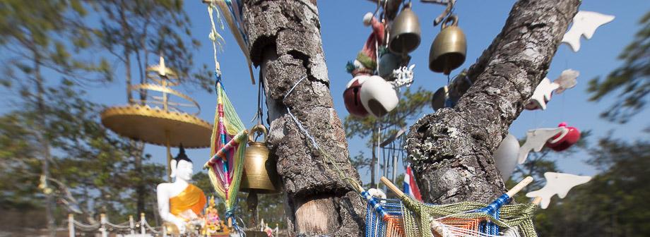 ไปไหนดี ที่เที่ยว ภูกระดึง ไทยเที่ยวไทย เที่ยวทั่วไทย บทความประกวด น้ำ-ฟ้า-ป่า-เขา เลย เที่ยวเมืองไทย ที่เที่ยวเลย เว็บท่องเที่ยว อุทยานแห่งชาติภูกระดึง  diaryaward2014