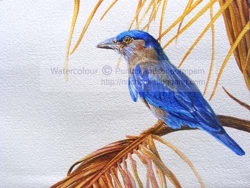 ภาพวาดสีน้ำนกตะขาบทุ่ง