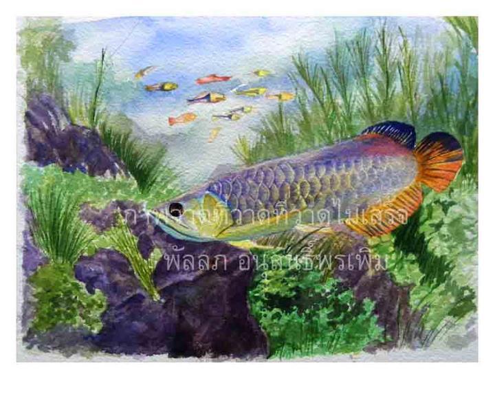 ภาพวาดปลามังกร ภาพวาดสีน้ำ พัลลภ อนุสนธิ์พรเพิ่ม ภาพวาดทางวิทยาศาสตร์ ภาพวาดทางการแพทย์ ศิษย์เก่ามหาวิทยาลัยมหิดล วิทยาเขตศิริราช