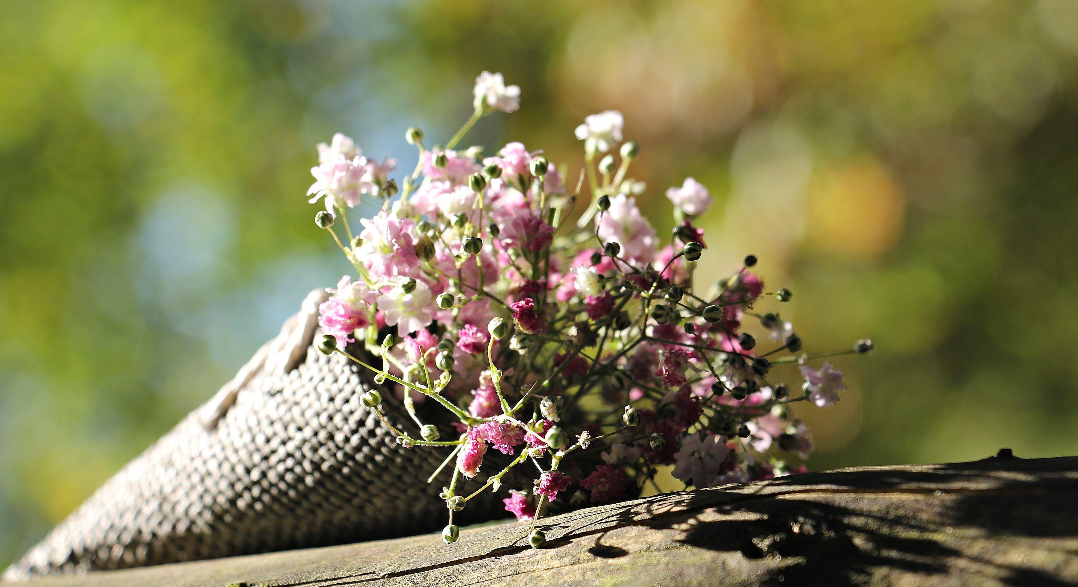 ดอกยิปโซง้อแฟน