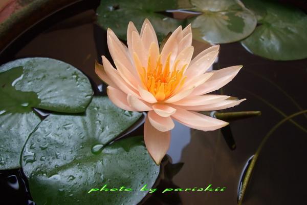 thai orchid oslo eskorte luksus
